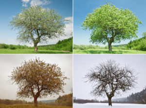 tree in four different seasons