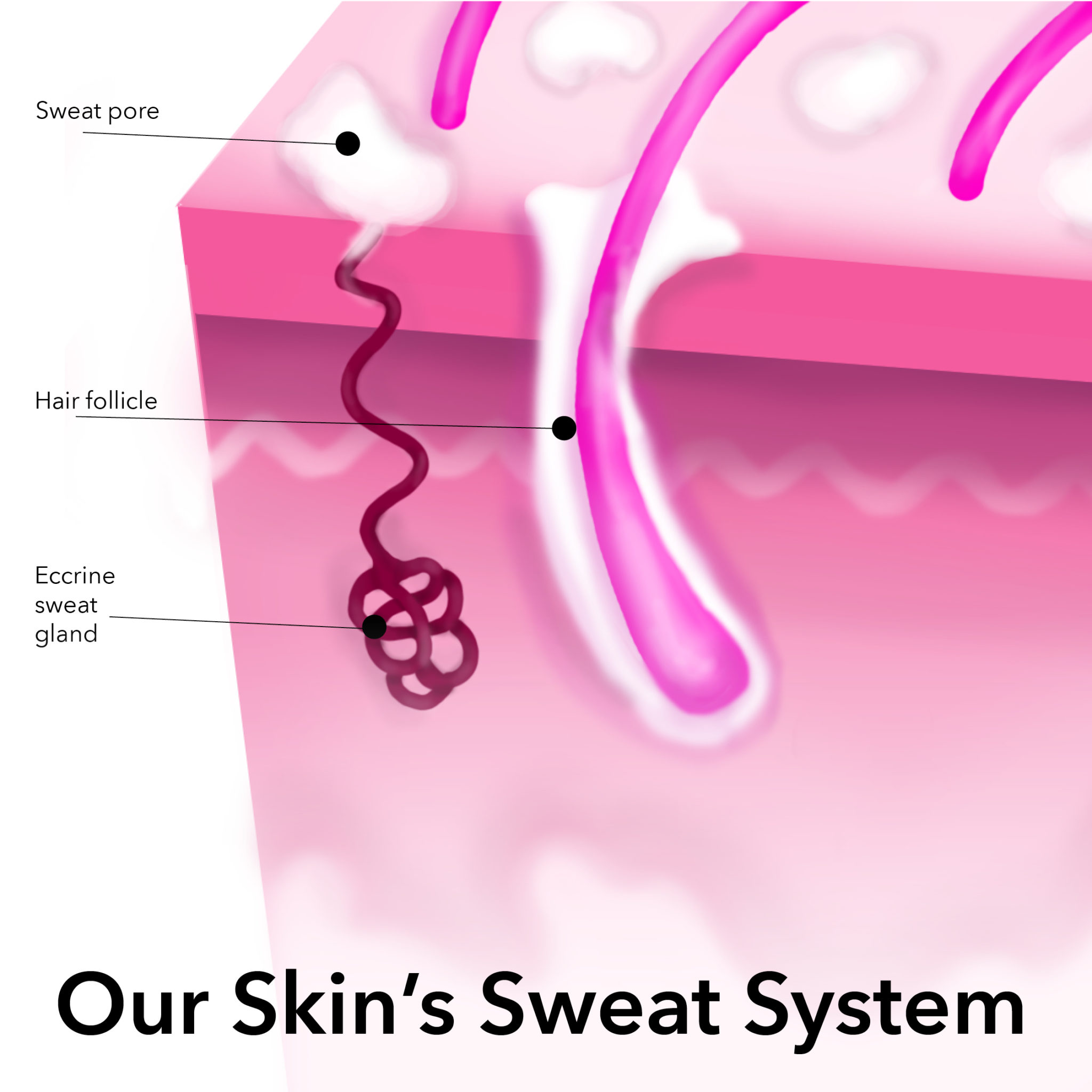 sweat in pores breakout