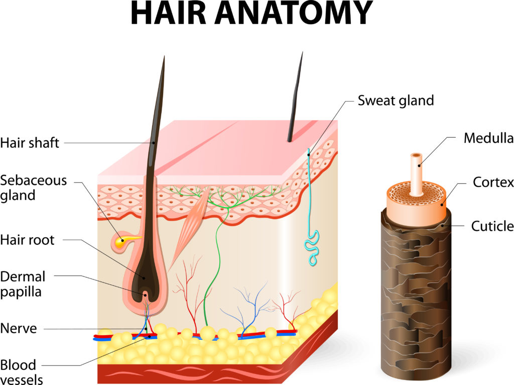 Splitting Ends: Why Does Our Hair Split? - The Pretty Pimple